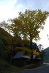 井手野2.JPG
